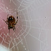 Caught in your Pretty Pink Web~keh