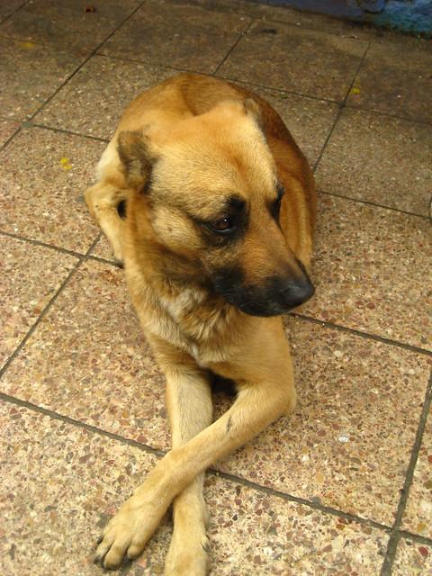Dapper Dog Mobile Pet Grooming Mobile Al