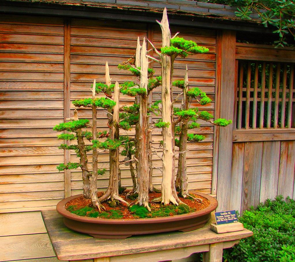 Bonsai Tree Bonsai Trees At The Huntington Library