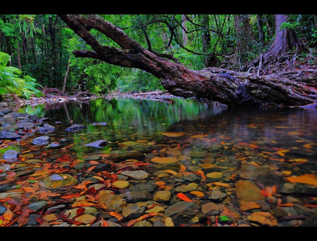 Australian rainforest visit apnoea photography flickr for Australian rainforest