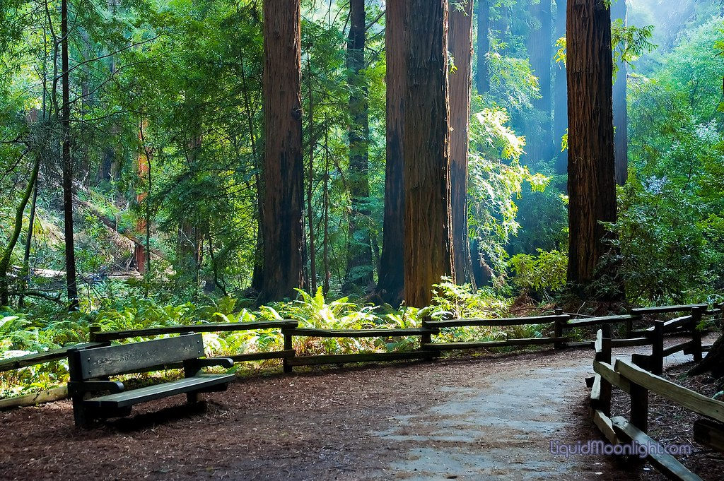 My Quiet Place Muir Woods National Monument California