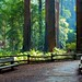 My Quiet Place - Muir Woods National Monument California