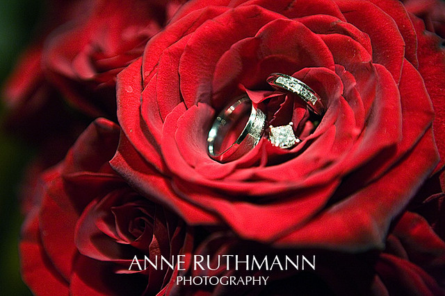 Classic Red Rose Wedding Rings Anne Ruthmann Flickr