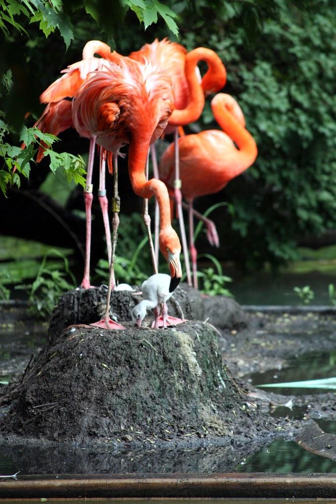 Flamingo Nests Flamingo nest | Baby f...