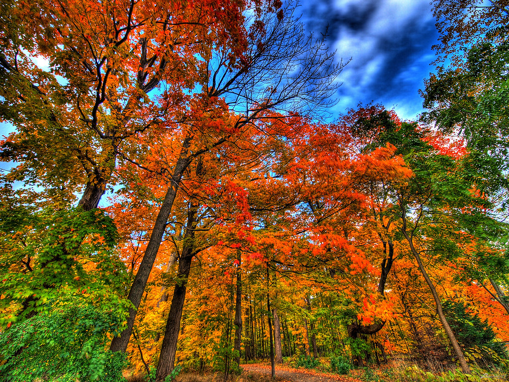 autumn falls... | a little park in mississauga; new lens ...