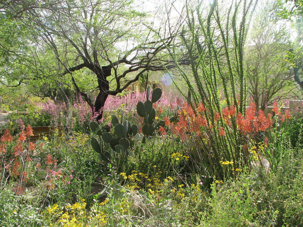Spring in Tucson | Tohono Chul garden showing off the ...