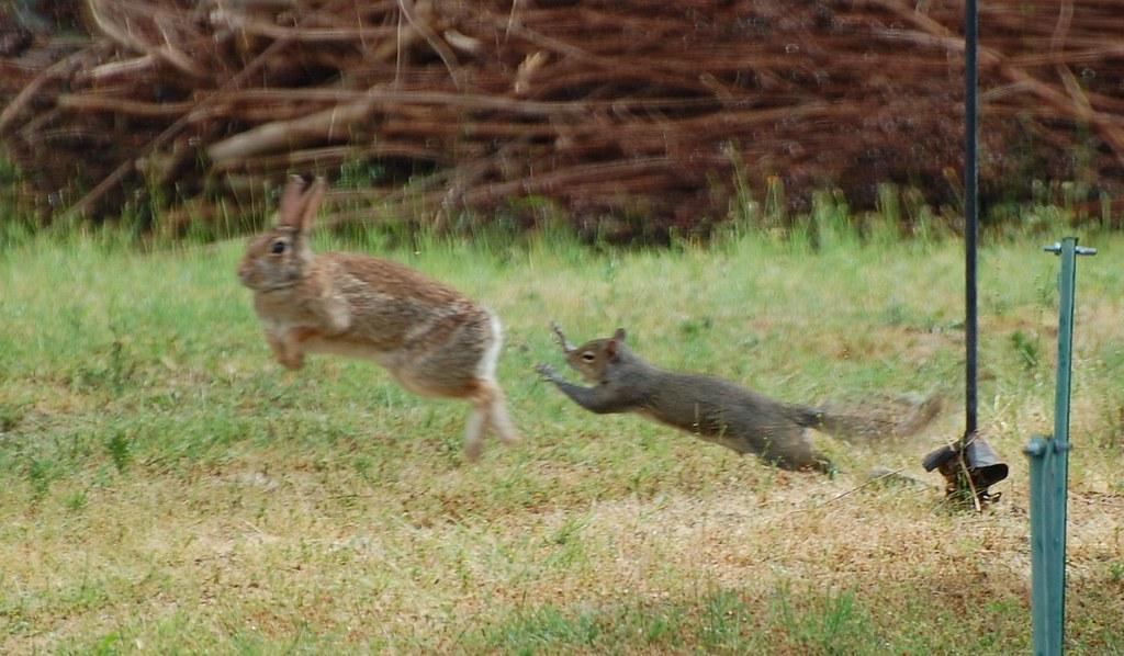 rabbit pearl mötesplatsen mobil log in