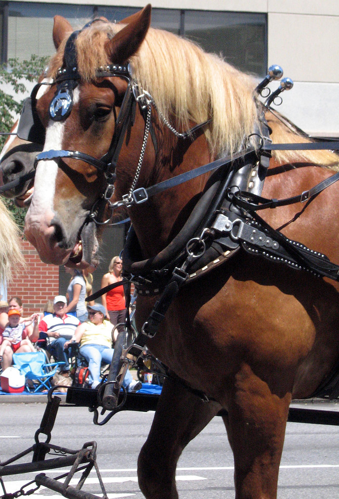 Draft Horse D Ring Harness For Sale