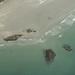 Clayoquot Sound aerial