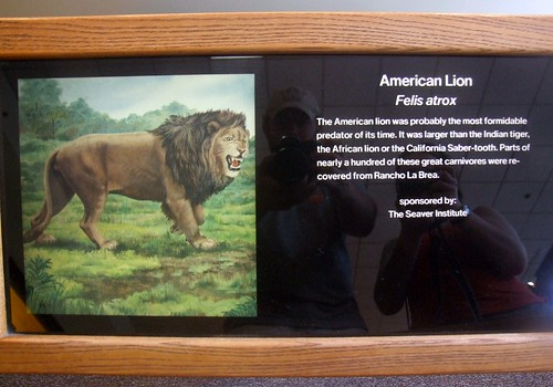 American Lion Flickr Photo Sharing