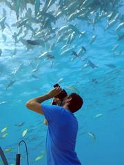 In the Ithaa Underwater Restaurant, Conrad Maldives