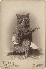 Cat Playing a Banjo Cabinet Card **Other Cat Photographic Models! | by Photo_History - Here but not Happy