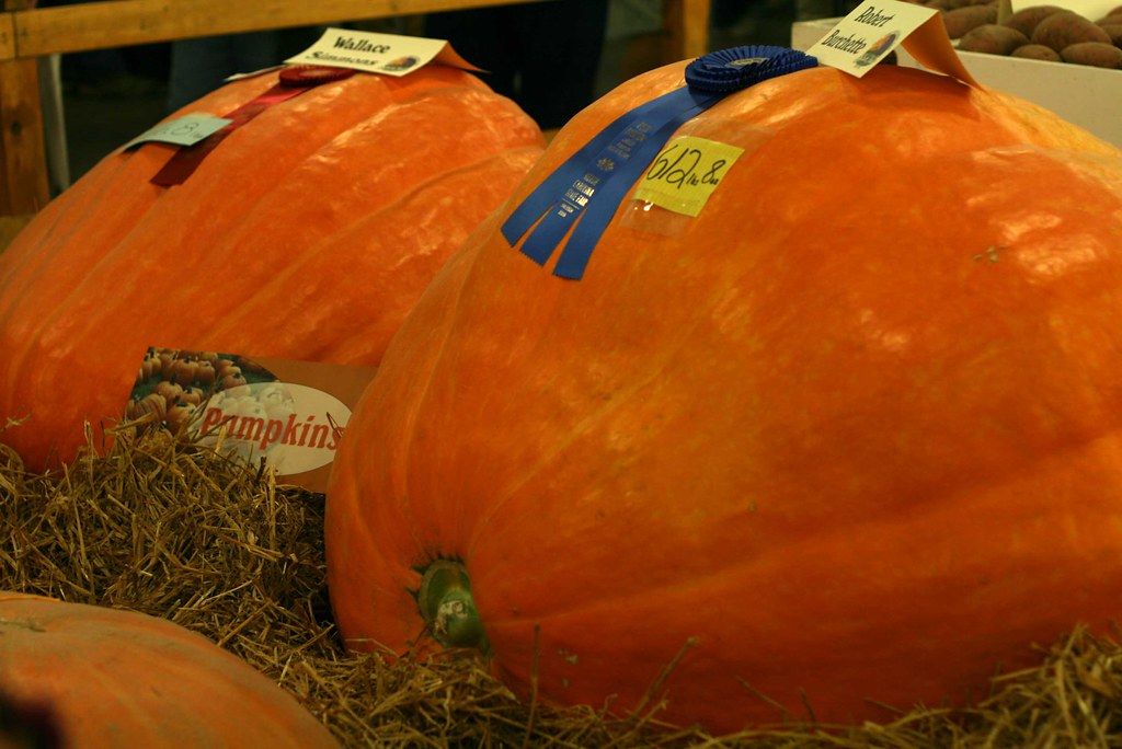 Pound And Pumpkin Cake Mlp
