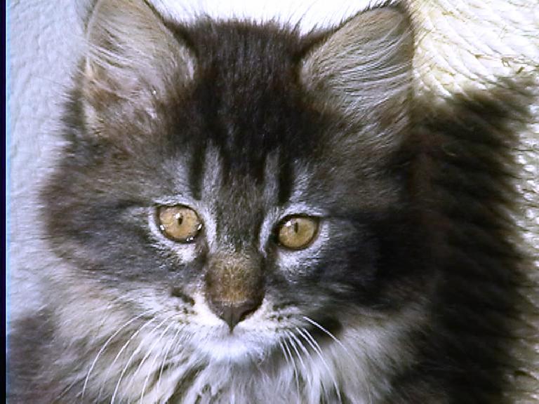 Lady, September 2001-February 2002