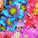 Colorful Crazy Daisies (2)