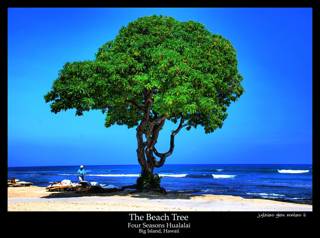 Beach On Hawaii Big Island