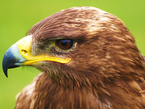 Bird of Prey | by Andy von der Wurm