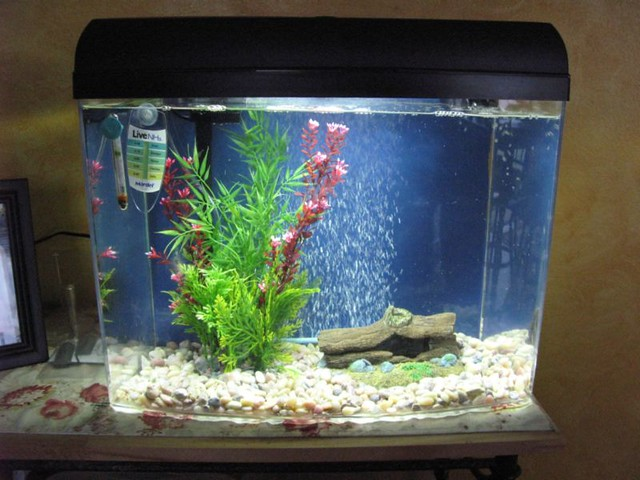 My empty fishtank day 4 of the humane fishless cycle for How do you clean a fish tank