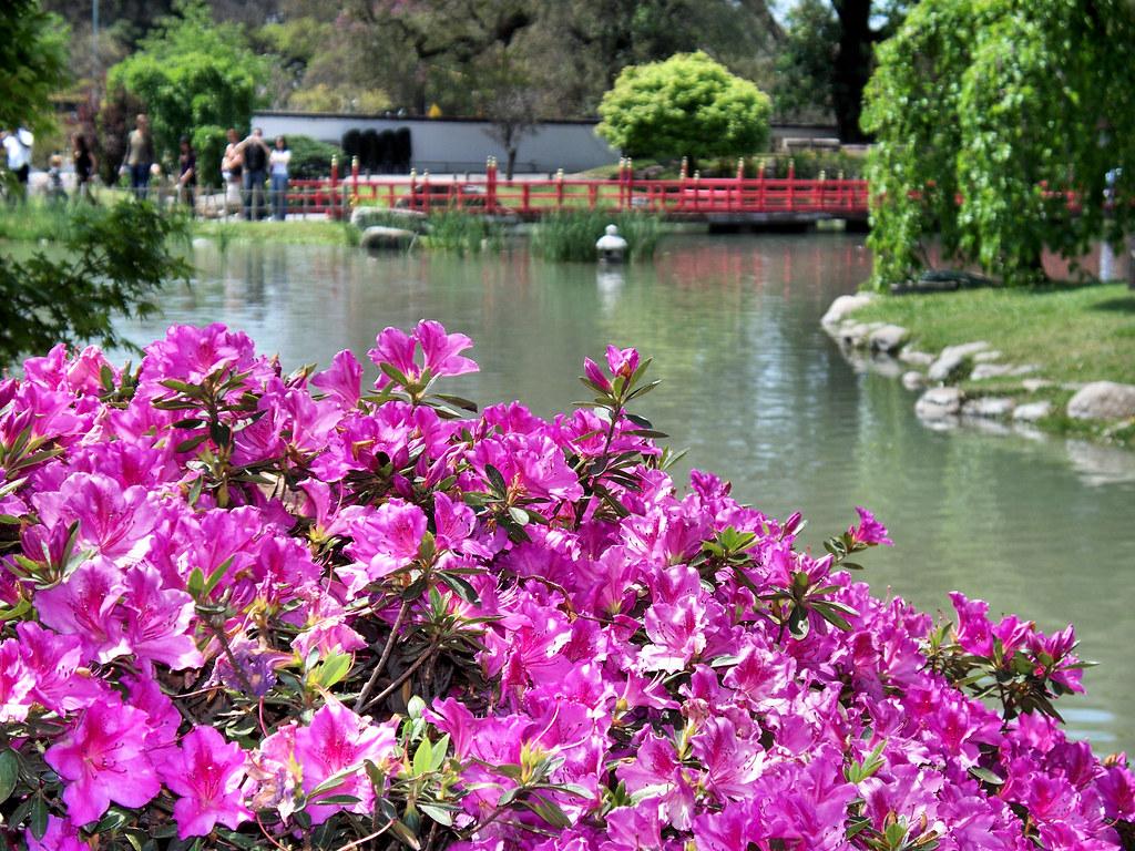 Primavera en el jard n japon s springtime in the japanes for Plantas jardin japones