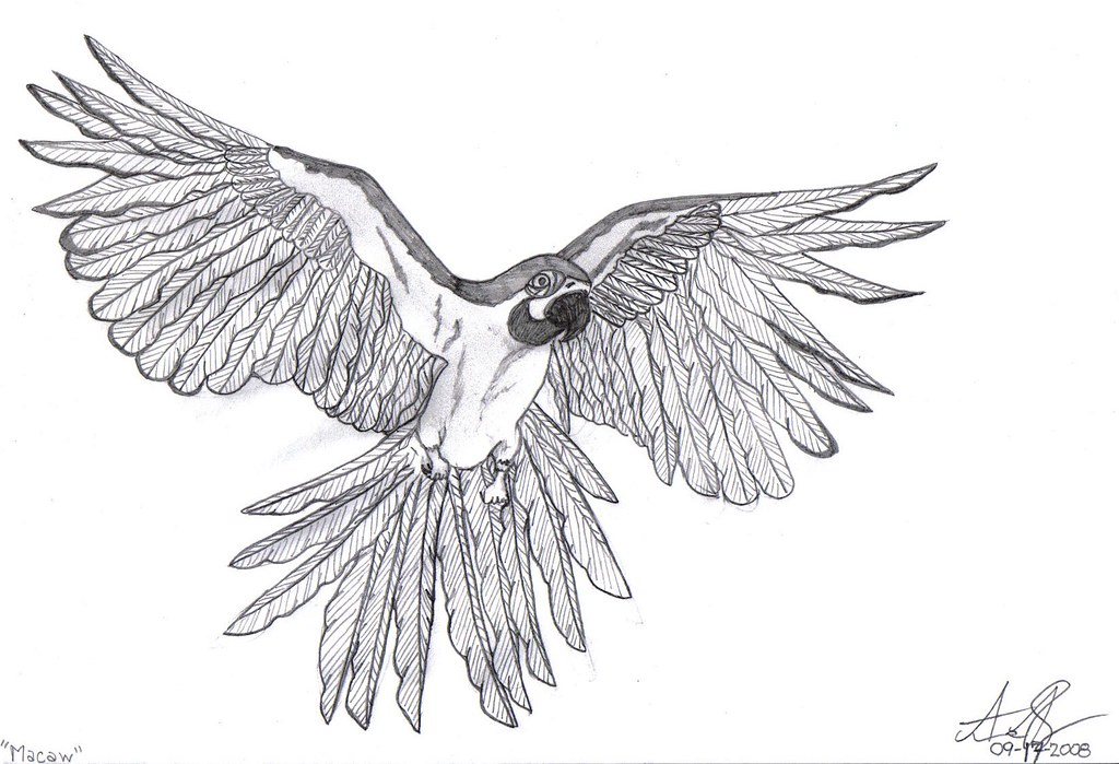 Macaw | All Sketches Are Done By Myself. Standard #2 Pencil U2026 | Flickr