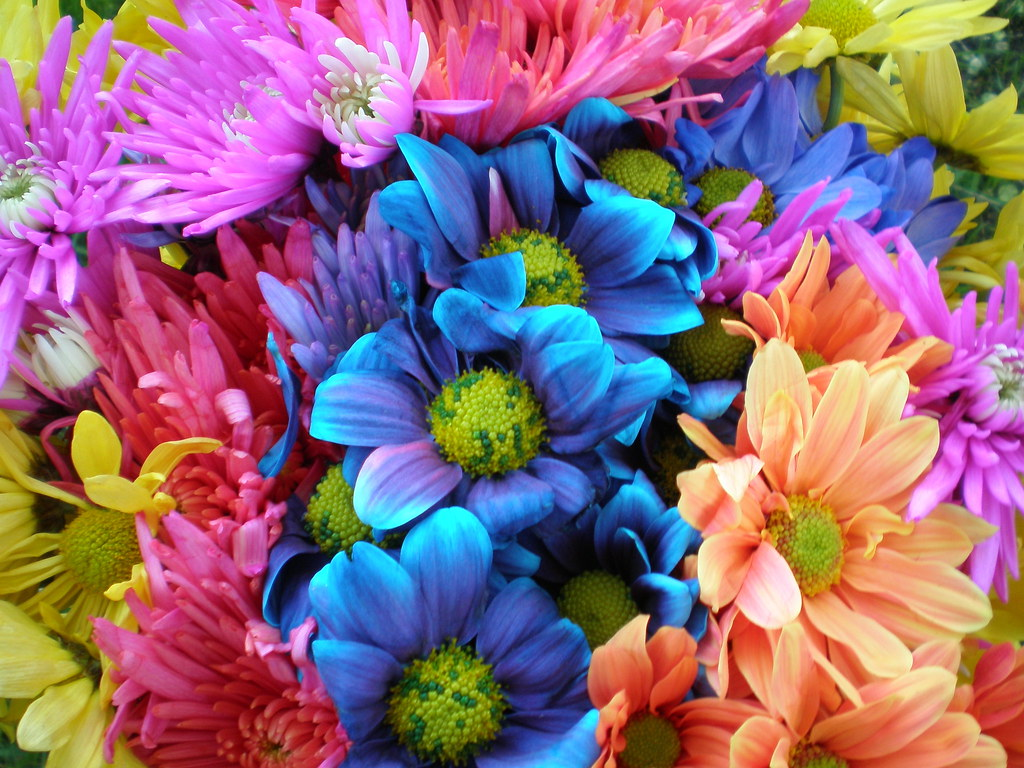 Free Colorful Flower Wallpaper Downloads: Colorful Crazy Daisies (1)