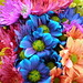 Colorful Crazy Daisies (1)
