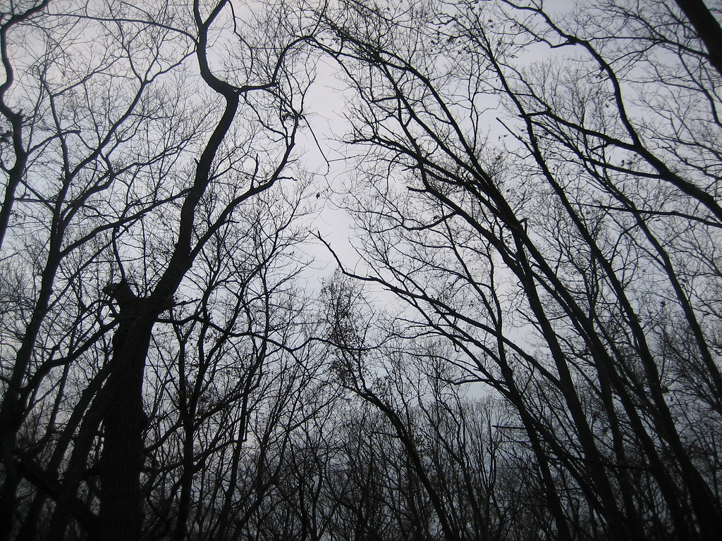Creepy Woods | Eugene Kim | Flickr Creepy Pictures