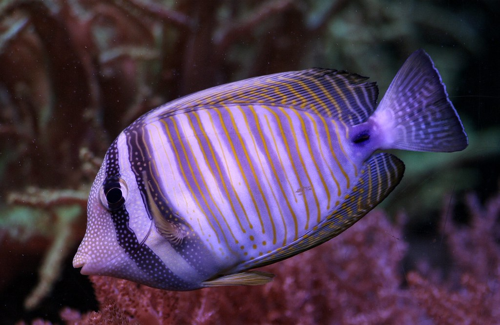 Saltwater fish at cleveland metroparks zoo cleveland oh for Cleveland metroparks fishing report