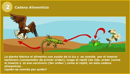 cadena alimenticia | Flickr - Photo Sharing!