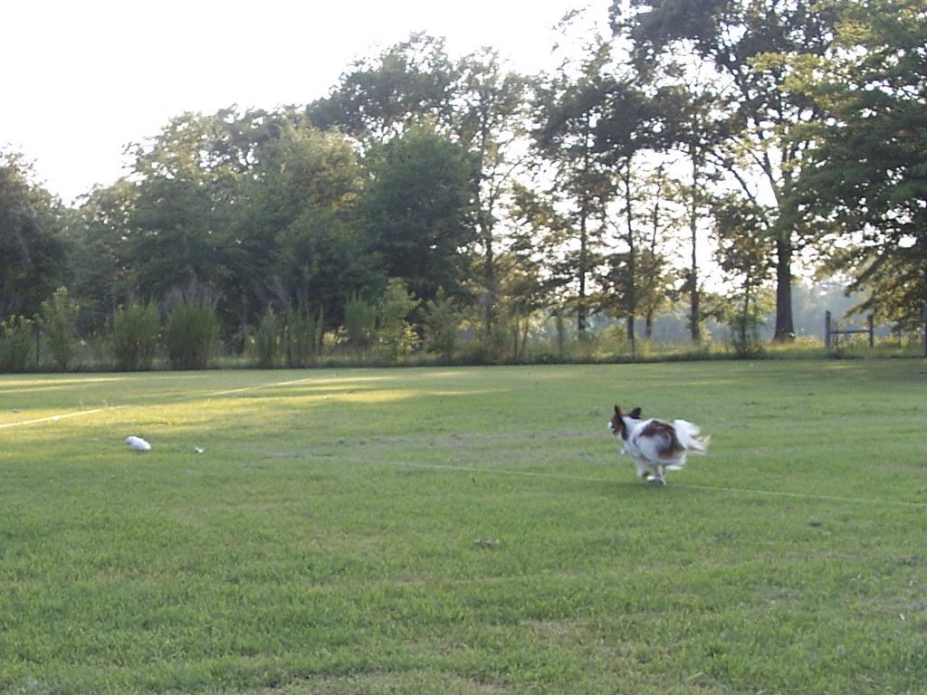 Free Shots Dogs
