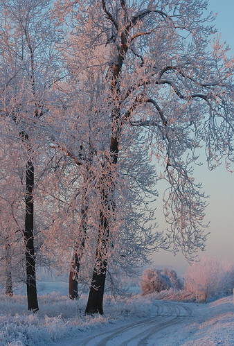 sunrise in the snow | by petalouda62