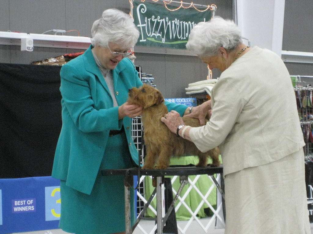 Dog Show Purina  Winner