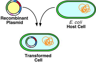 Pathogenomics of the Virulence Plasmids of Escherichia coli