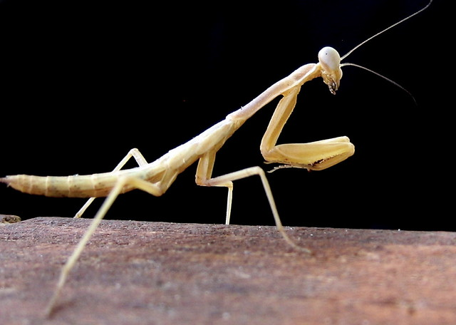 Pinnedyr | Stick insect found at the table at Grabbarna ... Z Table