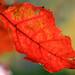 Fall Leaves #2826 a