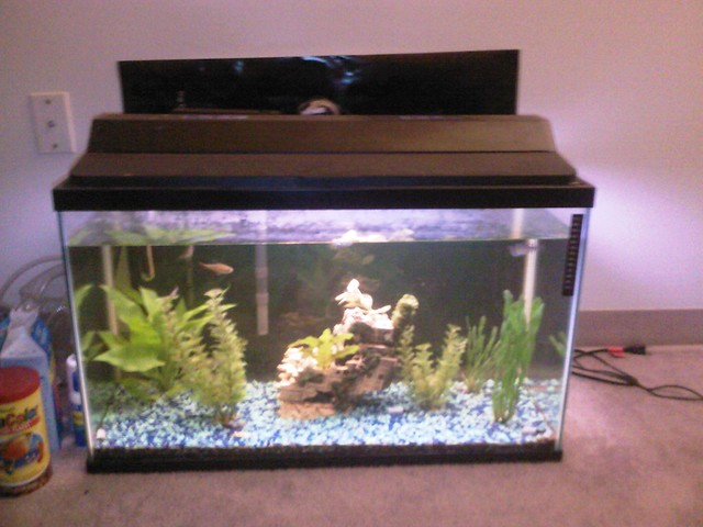20 gallon fish tank size aquarium tank size 20 gallons for How many fish in a 20 gallon tank