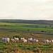 Pasture, road and sugarcane fields - Pasto, estrada e campos de cana.