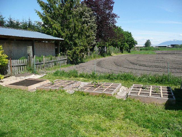 Square Foot Gardening Just Planted Seeds And Starts
