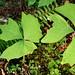 Zerg plant