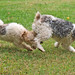 Annabella and Chucho at play
