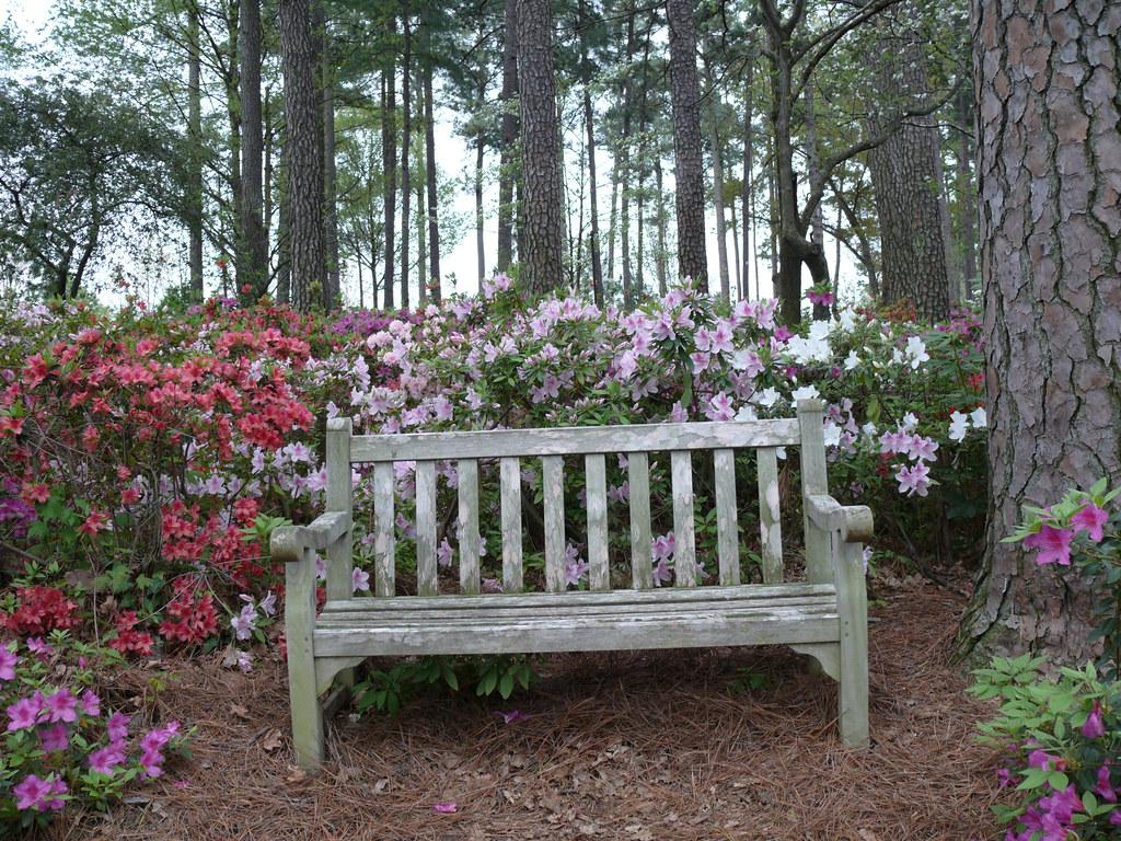 Wral Azalea Gardens Raleigh Nc Ray Rivera Flickr