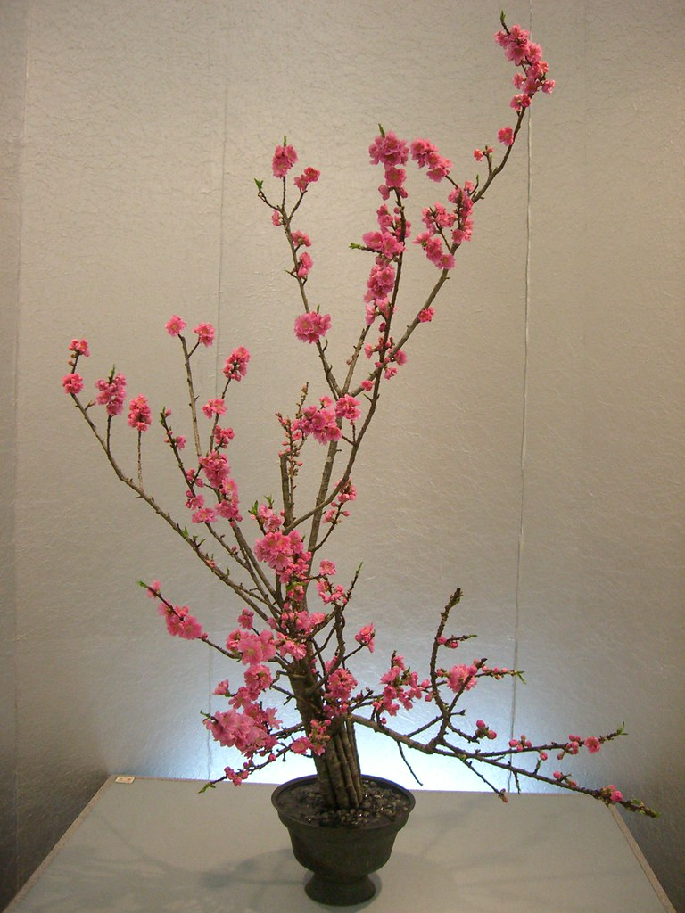 Japanese flower arrangement ikebana いけばな