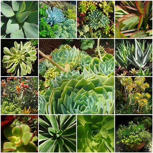 succulents for a sustainable green garden