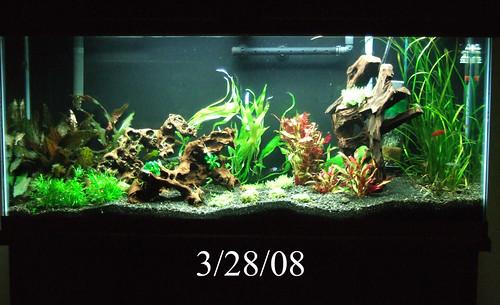 55 gallon planted aquarium flickr photo sharing for 55 gallon fish tank setup