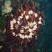 Plumero submarino