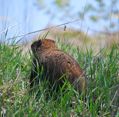 Groundhog War - Photo Friday | by Patanne