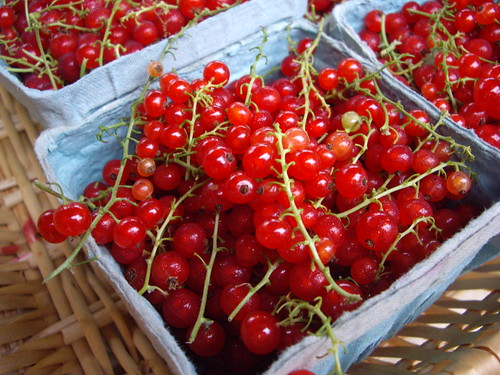 Red Currants from Comb's Herbs | by swampkitty