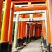 kyoto - fushimi inari toriis