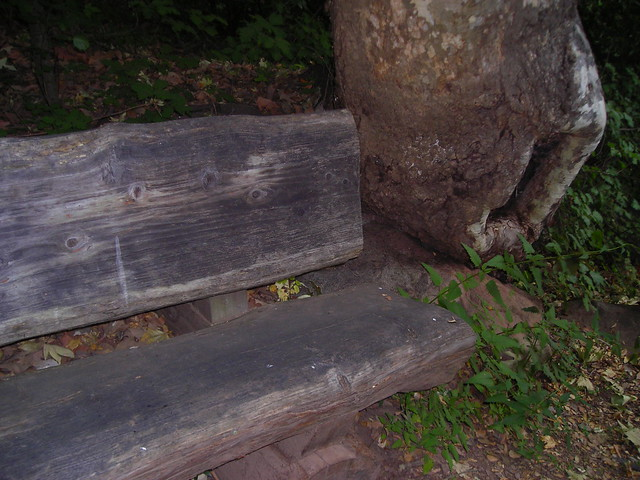 Bench And Tree Trunk Flickr Photo Sharing