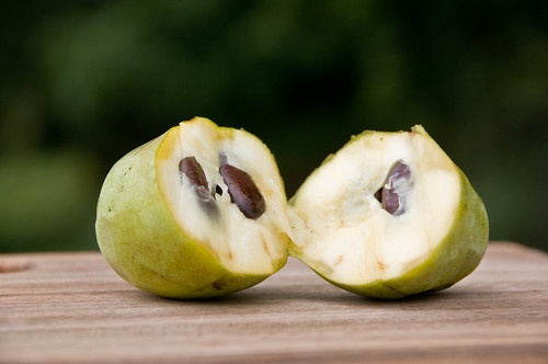 Pawpaw Cut In Half | by starmer